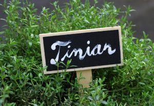 Ingefærshot med timian og chili